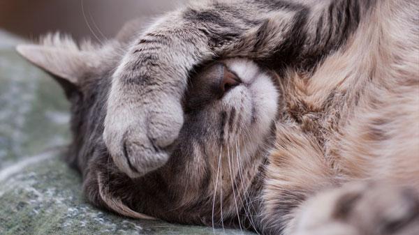 Метастазы в лгких у кошки симптомы и причины