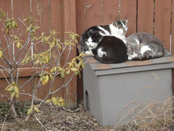 Cats on top of the Feral Villan