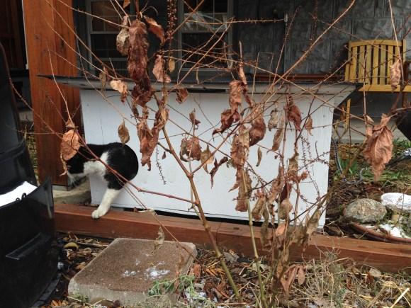 Deice leaving the Alley Cat Allies Villa
