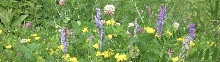 summerwildflowerpanorama -WG