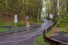 Platte Clove Road