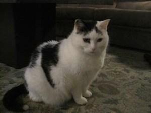 Oreo at The Cat's Meow Inn