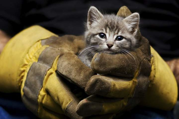 Kitten being rescued