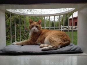 Feline Window box