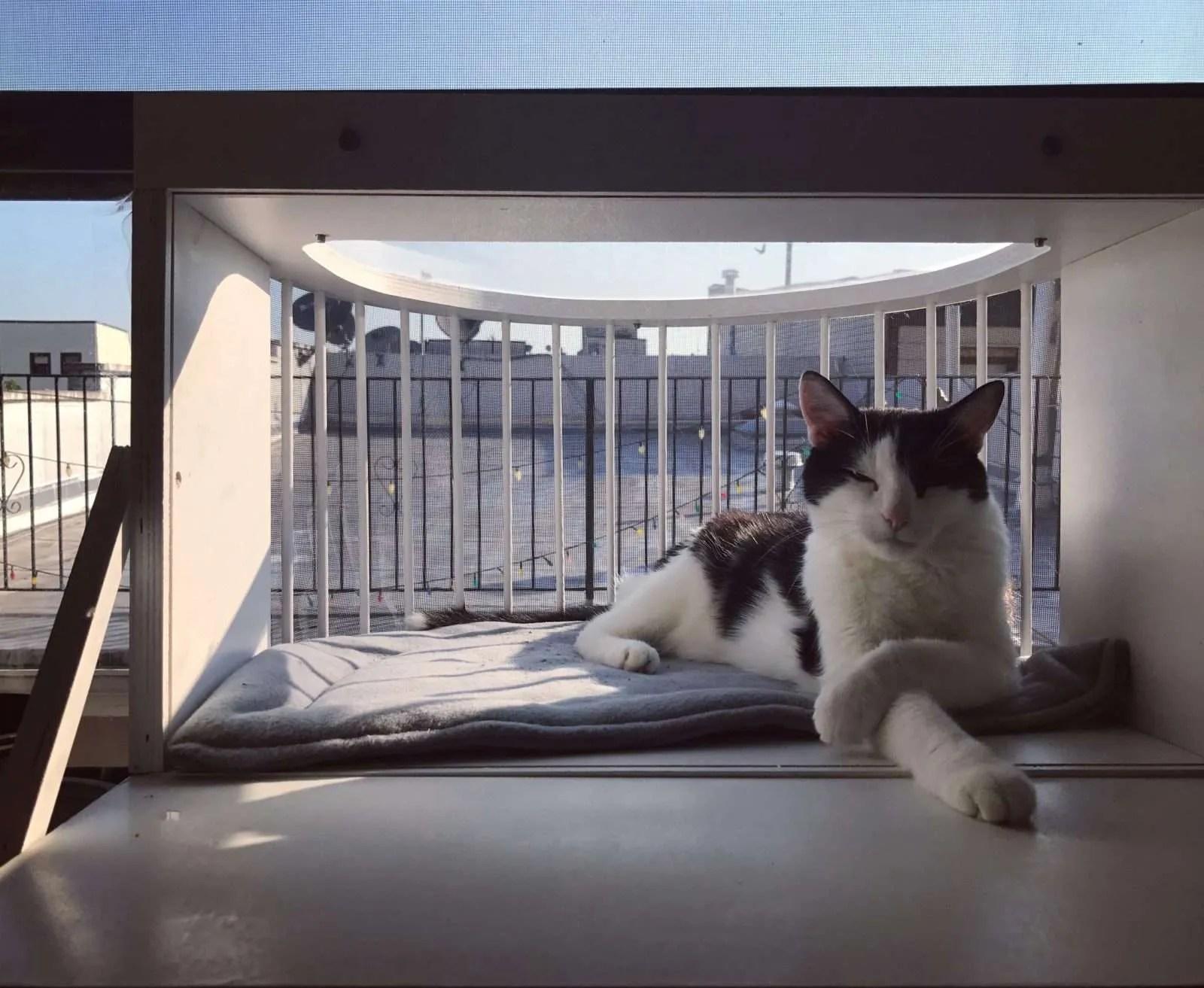 Cat Solarium Catio Cat Patio Cat Balcony