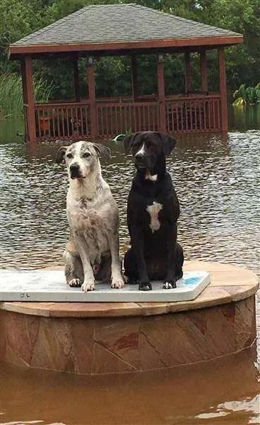 Houston Area Pets Need Donations Too