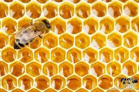 蜂巢蜜的那些事兒,你知道多少? - 每日頭條