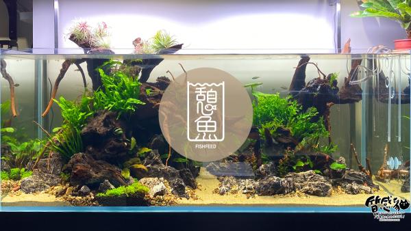 台北內湖水族店推薦|憩魚水族設計|質感打造水族新生態