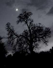Cemetery tree