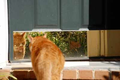 red tabby cat
