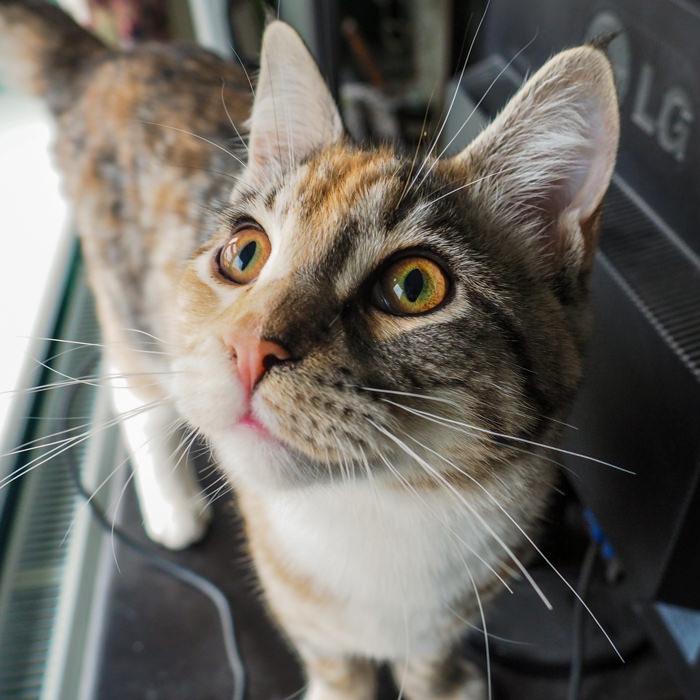 cats random mutation variation population natural