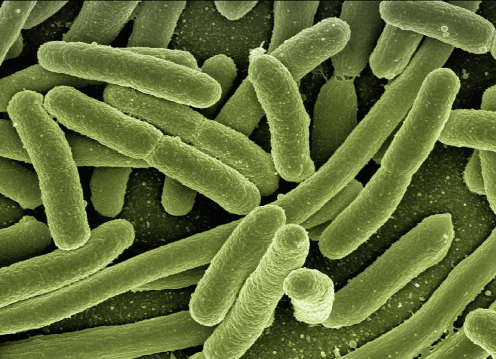 e-coli superbug antibiotic resistance
