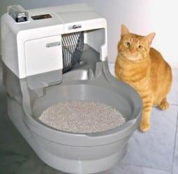Cat not using litterbox