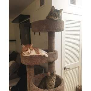 best scratching post for kittens