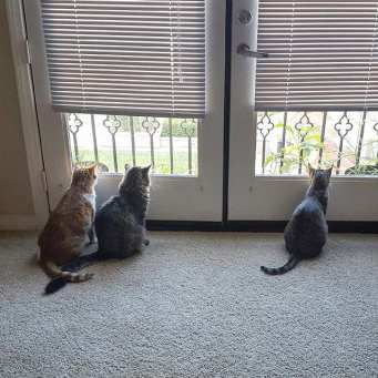 Outside Cats or Inside Cats