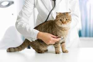 Outdoor Cat Diseases