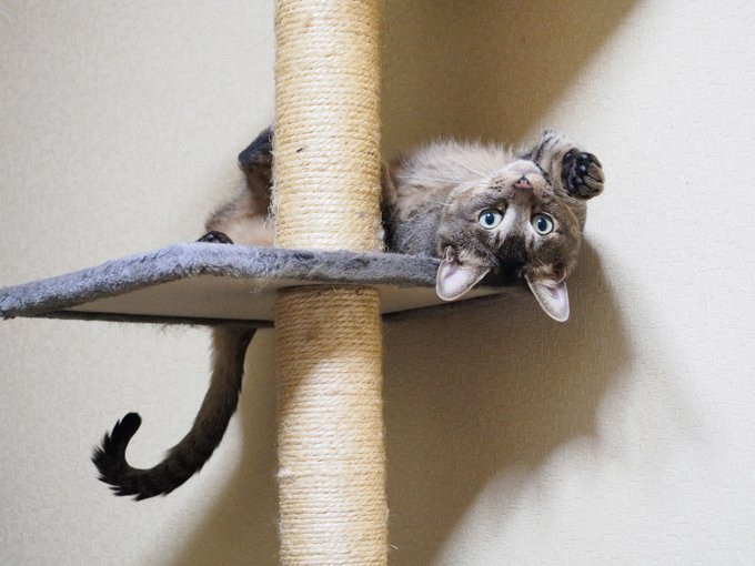 Shredded scratching posts are trophies for cats, so don't throw them away. (Picture Credit: Getty Images)