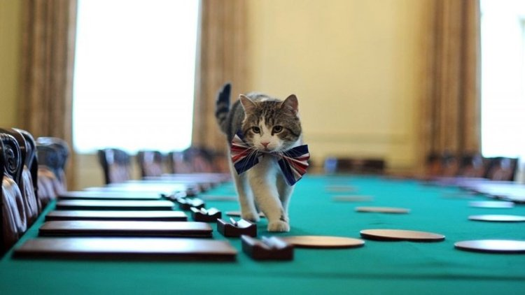 Larry The Cat Stays At 10 Downing Street As David Cameron Resigns - CatTime