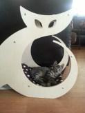 Worlds Best Cat Scracher
