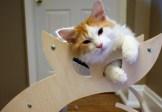 cropped-cats-love-their-cattino-cat-scratcher.jpg