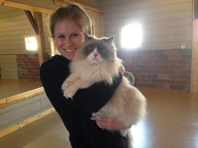 коты и йога