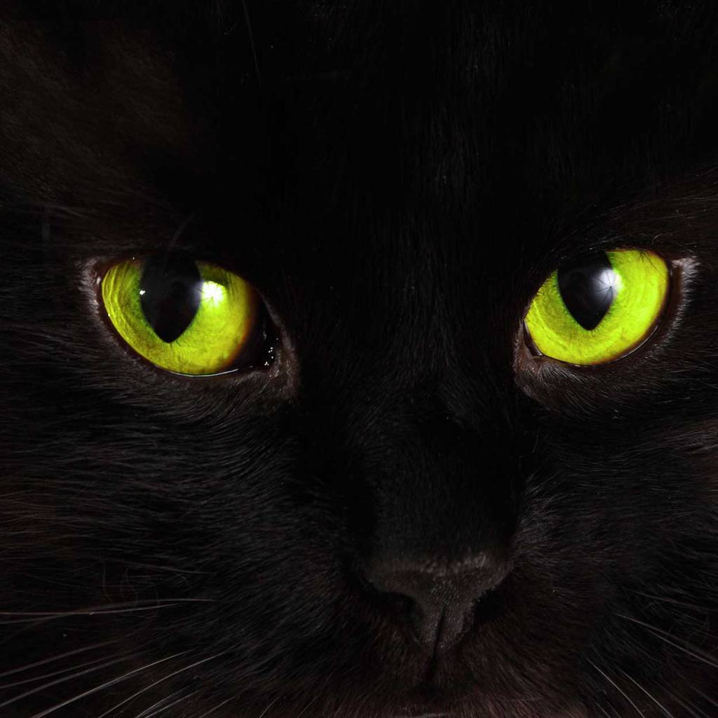 Extreme close-up of the bright green eyes of an all black cat staring at you.