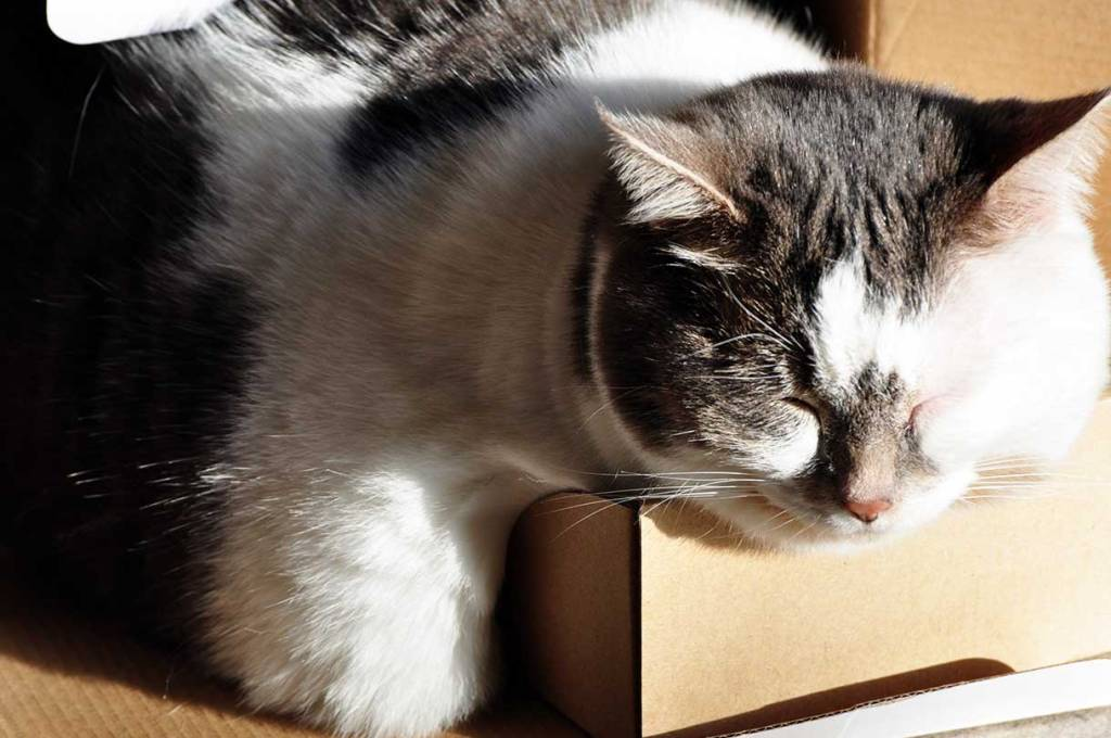 Pudgy cat overflowing the box she's sleeping in