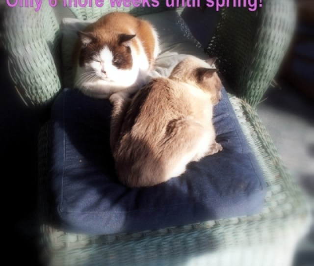 Groundhog Day Spring Cats Porch