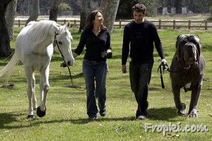 horsesize_nappe