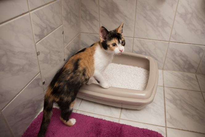 Litter Box In A Small Apartment
