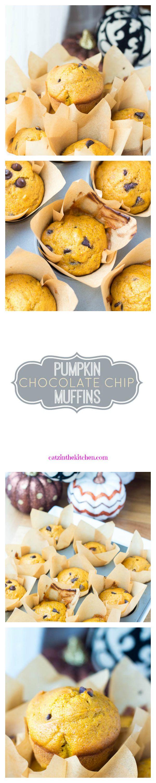 Pumpkin Chocolate Chip Muffins   Catz in the Kitchen   catzinthekitchen.com   #pumpkin