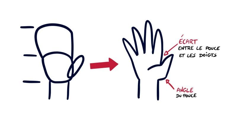 Proportions de la main