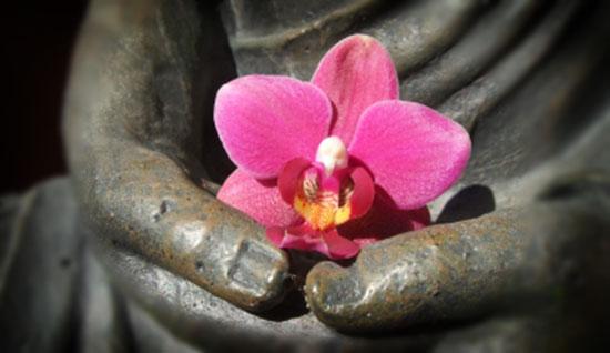 thai-lotus-flower