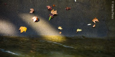 VPir_11_2013-11