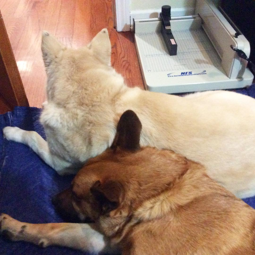 They guard my book cutter as they snuggle
