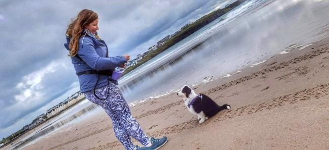 Puppy training in Coleraine, Portrush, Portstewart, Bushmills