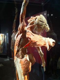 Bodyworlds' Angel