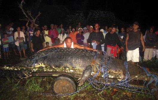 largest crocodile phillipines