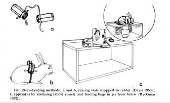 bed bug rabbit feeding apparatus