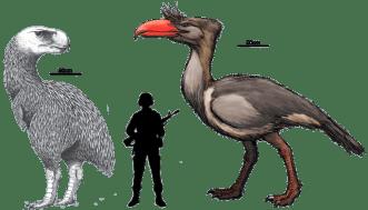 Phorusrhacidae terror bird megafauna