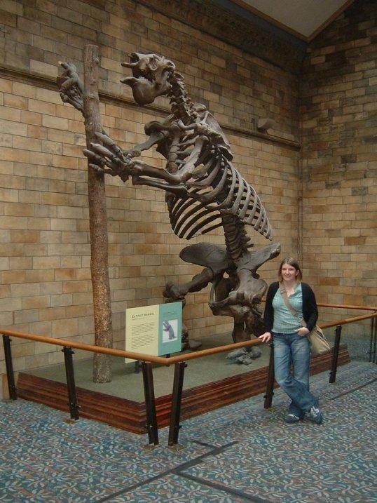 megatherium ground sloth megafauna