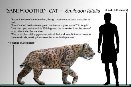 smilodon sabre tooth cat megafauna