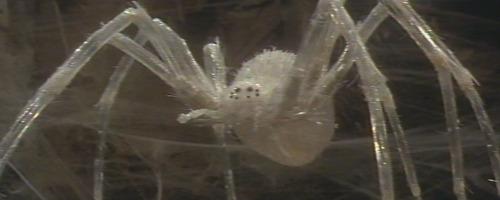 krull-spider