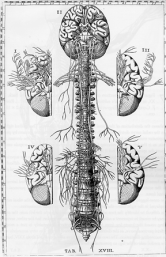 brain-and-spine