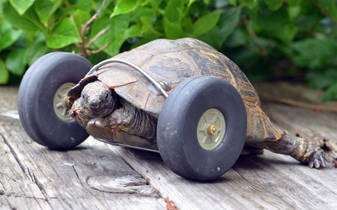 mrs-t-cyber-turtle