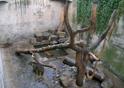 cesky-krumlov-bears