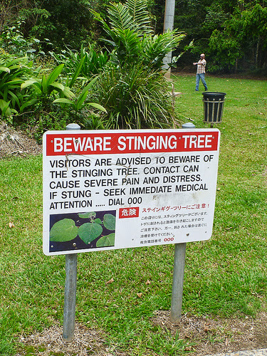 stinging-tree