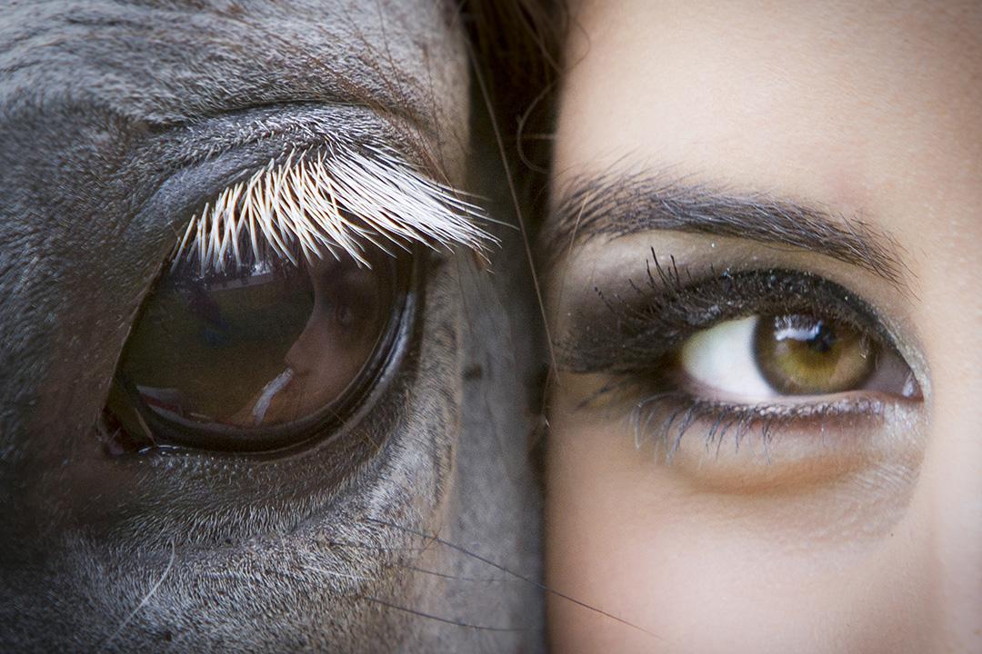 Cavalos que ensinam