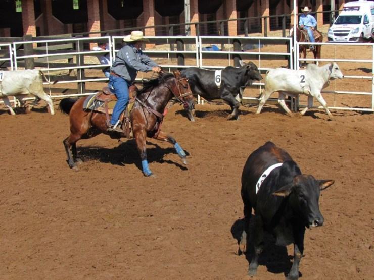 Brasileiro de Ranch Sorting