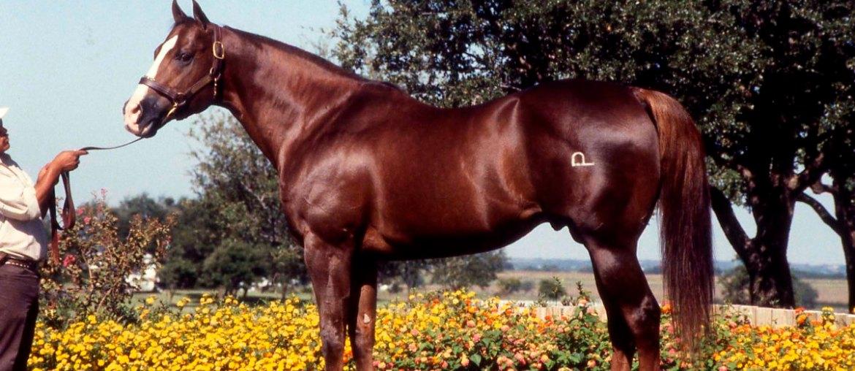 Dash For Cash é uma lenda no cavalo
